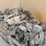 Vodou: Aklamakpa, le reste des animaux sacrifiés au vodou Photo: Gaëtan Noussouglo