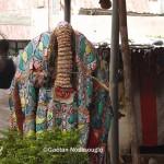 Un Egungun du Togo © Gaëtan Noussouglo